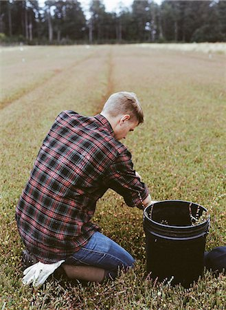 rustic - A cranberry farm in Massachusetts. Crops in the fields. A young man working on the land, harvesting the crop. Stock Photo - Premium Royalty-Free, Code: 6118-07354714