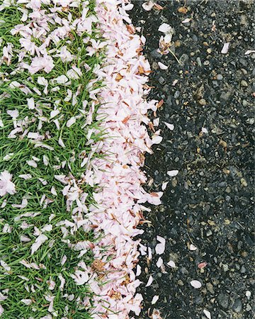 spring background - Pink fallen cherry blossom petals blown across the pedestrian sidewalk, collecting on the grass in Seattle in spring. Stock Photo - Premium Royalty-Free, Code: 6118-07440835