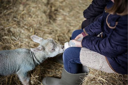 domestic sheep - A girl bottle feeding a small hungry lamb. Stock Photo - Premium Royalty-Free, Code: 6118-07731811