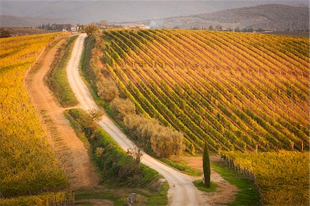 High angle view of a dirt road through a Tuscan vineyard. Stock Photo - Premium Royalty-Free, Code: 6118-08140238