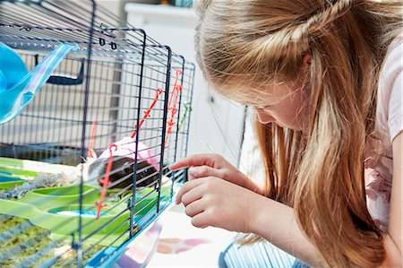 A girl looking into a pet cage at her small brown hamster. Stock Photo - Premium Royalty-Free, Code: 6118-08797624