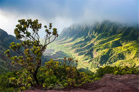 Kalalau lookout over the Napali coast from the Kokee State Park, Kauai, Hawaii, United States of America, Pacific Stock Photo - Premium Royalty-Free, Code: 6119-07443822