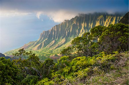 Kalalau lookout over the Napali coast from the Kokee State Park, Kauai, Hawaii, United States of America, Pacific Stock Photo - Premium Royalty-Free, Code: 6119-07443827