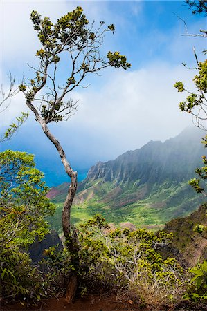 Kalalau lookout over the Napali coast from the Kokee state park, Kauai, Hawaii, United States of America, Pacific Stock Photo - Premium Royalty-Free, Code: 6119-07443828