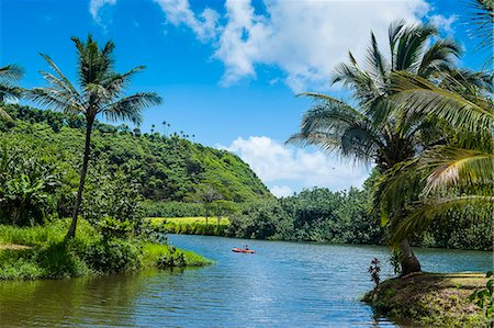 palm - Wailua River. Kauai, Hawaii, United States of America, Pacific Stock Photo - Premium Royalty-Free, Code: 6119-07443835