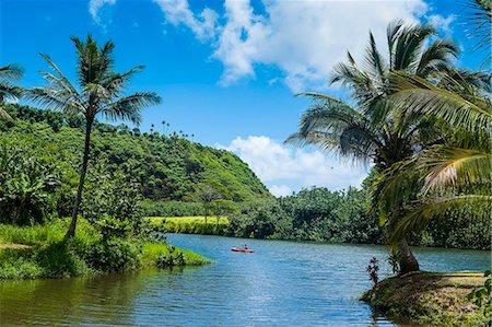 palm - Wailua River. Kauai, Hawaii, United States of America, Pacific Stock Photo - Premium Royalty-Free, Code: 6119-07443835