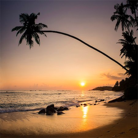 exotic outdoors - Palm tree at sunset on tropical Mirissa Beach, South Coast of Sri Lanka, Southern Province, Sri Lanka, Asia Stock Photo - Premium Royalty-Free, Code: 6119-07451155