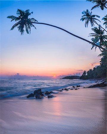 exotic outdoors - Palm tree at sunset on tropical Mirissa Beach, South Coast of Sri Lanka, Southern Province, Sri Lanka, Asia Stock Photo - Premium Royalty-Free, Code: 6119-07451161