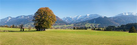 fall - Single tree in Prealps landscape in autumn, Fussen, Ostallgau, Allgau, Allgau Alps, Bavaria, Germany, Europe Stock Photo - Premium Royalty-Free, Code: 6119-07451727