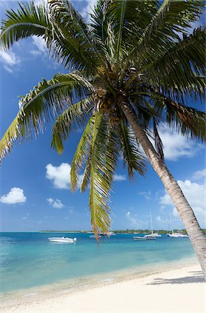 palm - Beach scene with palm trees, blue sky and boats moored on the Indian Ocean at Trou D'eu Douce, a village on the east coast of Mauritius where tourists catch ferries to the idyllic island of Ile Aux Cerfs, Mauritius, Indian Ocean, Africa Stock Photo - Premium Royalty-Free, Code: 6119-07744594