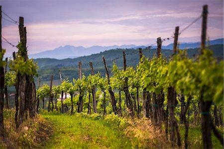 Vineyards and mountains near Smartno in the Goriska Brda wine region of Slovenia, Europe Stock Photo - Premium Royalty-Free, Code: 6119-07744524