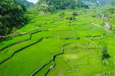 philippine terrace farming - Hapao rice terraces, Banaue, UNESCO World Heritage Site, Luzon, Philippines, Southeast Asia, Asia Stock Photo - Premium Royalty-Free, Code: 6119-07781247