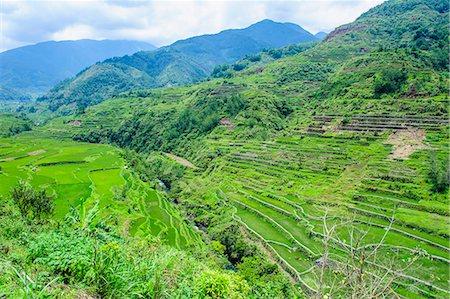 philippine terrace farming - Hapao rice terraces, Banaue, UNESCO World Heritage Site, Luzon, Philippines, Southeast Asia, Asia Stock Photo - Premium Royalty-Free, Code: 6119-07781246