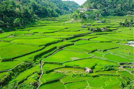 philippine terrace farming - Hapao rice terraces, Banaue, UNESCO World Heritage Site, Luzon, Philippines, Southeast Asia, Asia Stock Photo - Premium Royalty-Free, Code: 6119-07781248