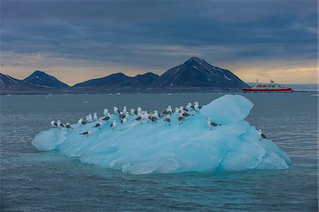 Kittiwakes sitting on a huge piece of glacier ice with an expedition boat in the background, Hornsund, Svalbard, Arctic, Norway, Scandinavia, Europe Stock Photo - Premium Royalty-Free, Code: 6119-07968981