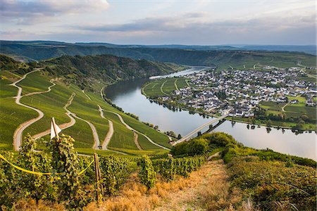 Vineyards around Piesport and the Moselle River, Moselle Valley, Rhineland-Palatinate, Germany, Europe Stock Photo - Premium Royalty-Free, Code: 6119-07969019