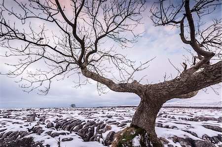 Twistleton Scar End in snow, Ingleton, Yorkshire Dales, Yorkshire, England, United Kingdom, Europe Stock Photo - Premium Royalty-Free, Code: 6119-08658052