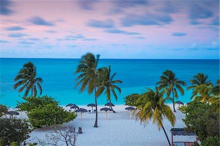 palm - Playa Esmeralda, Holguin Province, Cuba, West Indies, Caribbean, Central America Stock Photo - Premium Royalty-Free, Code: 6119-08724812