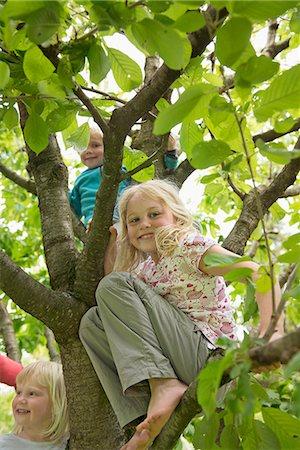 Three small kids in garden sitting in cherry tree Stock Photo - Premium Royalty-Free, Code: 6121-07809949