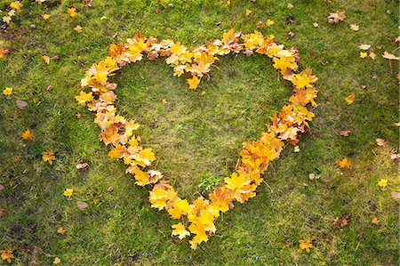 Yellow autumn leaves heart shape grass from above Stock Photo - Premium Royalty-Free, Code: 6121-07970283