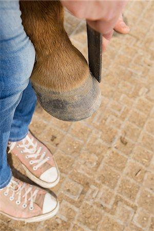 farmhand (female) - Horse's hoof manicure, Bavaria, Germany Stock Photo - Premium Royalty-Free, Code: 6121-08106669