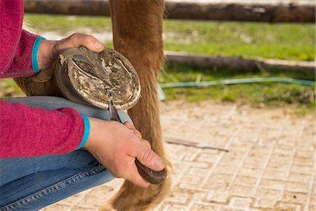 farmhand (female) - Woman cleaning horse's hoof, Bavaria, Germany Stock Photo - Premium Royalty-Free, Code: 6121-08106672
