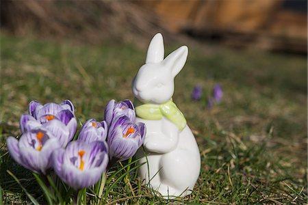 represented - Purple crocus flowers with decorative rabbit in a garden, Munich, Bavaria, Germany Stock Photo - Premium Royalty-Free, Code: 6121-08106637