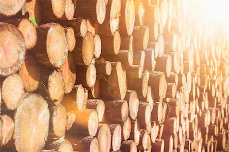 Close-up of wooden logs, Bavaria, Germany Stock Photo - Premium Royalty-Free, Code: 6121-08522147