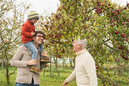 family apple orchard - Father, son and grandfather picking apples from apple tree in an apple orchard, Bavaria, Germany Stock Photo - Premium Royalty-Free, Code: 6121-08522245