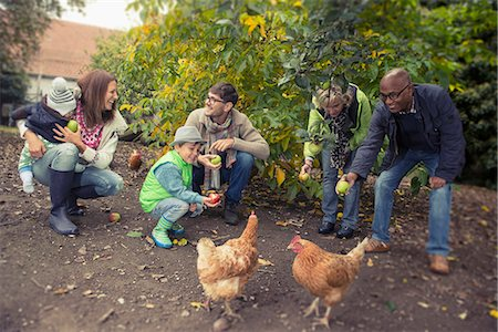 Family and friends feeding apples to chickens in farm, Bavaria, Germany Stock Photo - Premium Royalty-Free, Code: 6121-08522261