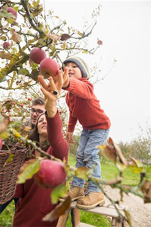 family apple orchard - Family picking apples in an apple orchard, Bavaria, Germany Stock Photo - Premium Royalty-Free, Code: 6121-08522232