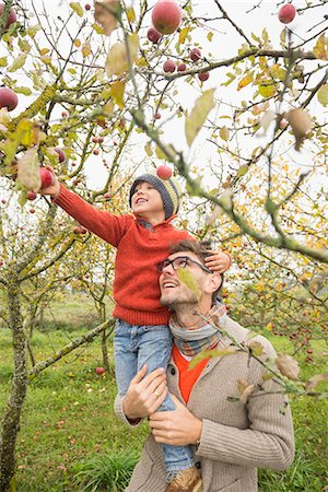 family apple orchard - Man carrying his son on shoulder for picking apples from tree in an apple orchard, Bavaria, Germany Stock Photo - Premium Royalty-Free, Code: 6121-08522238