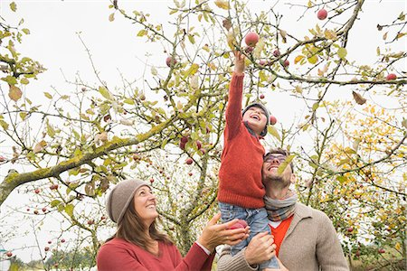 family apple orchard - Man carrying his son on shoulder for picking apples from tree in an apple orchard, Bavaria, Germany Stock Photo - Premium Royalty-Free, Code: 6121-08522239