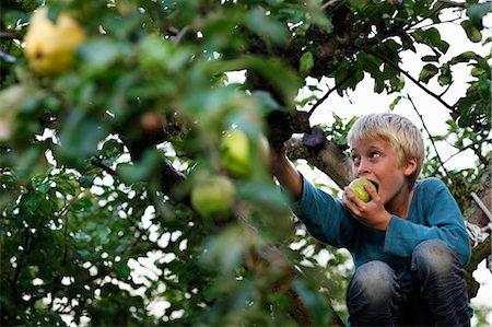 Boy eating in fruit tree Stock Photo - Premium Royalty-Free, Code: 6122-07701984