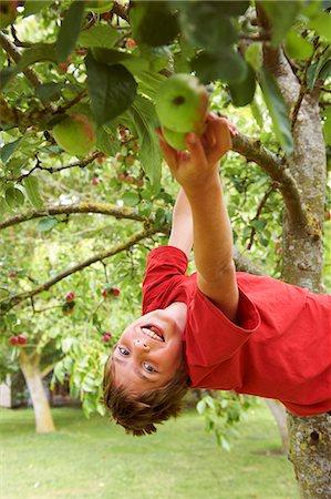 Smiling boy picking fruit in tree Stock Photo - Premium Royalty-Free, Code: 6122-07704853