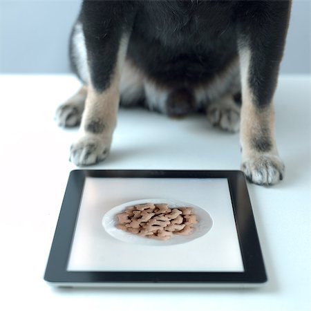 selective focus computer no people - shiba inu black look for food in the tablet Stock Photo - Premium Royalty-Free, Code: 613-07454042