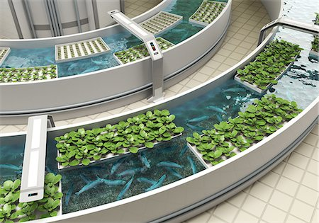 Aquaponics Detail Stock Photo - Premium Royalty-Free, Code: 613-07454250