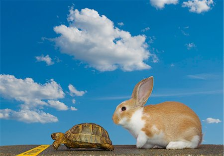 finish line - Tortoise and Hare, Finish Line Stock Photo - Premium Royalty-Free, Code: 613-07454618