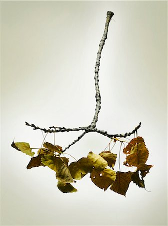 stick - Fallen dried branch. Stock Photo - Premium Royalty-Free, Code: 613-07459132