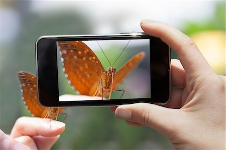 Woman photographing a butterfly wit a smart phone Stock Photo - Premium Royalty-Free, Code: 613-07459430