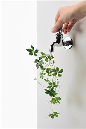 Green ivy and faucet Fotografie stock - Premium Royalty-Free, Codice: 613-07492726