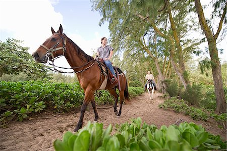A couple rides horses on a wooded trail Stock Photo - Premium Royalty-Free, Code: 613-07492846