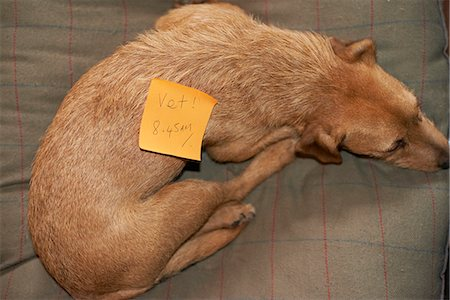 fur - adhesive note on pet dog Stock Photo - Premium Royalty-Free, Code: 613-07596892