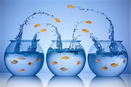 Goldfish jumping from three different bowls Stock Photo - Premium Royalty-Free, Code: 613-07596967