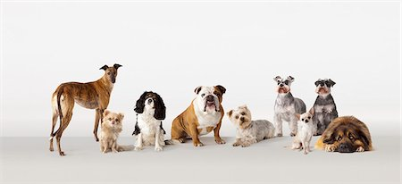 Group portrait of dogs Stock Photo - Premium Royalty-Free, Code: 613-08057284