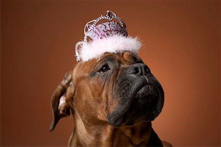 Dog with birthday crown on head Stock Photo - Premium Royalty-Free, Code: 613-01125310