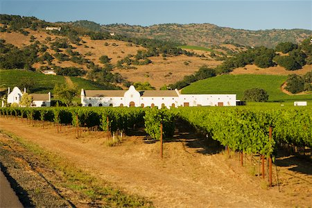 road landscape - Vineyard in front of a building Stock Photo - Premium Royalty-Free, Code: 625-00801499
