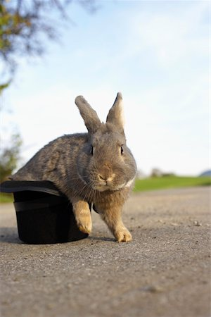 Grey rabbit sitting in a top hat, selective focus Stock Photo - Premium Royalty-Free, Code: 628-01279218