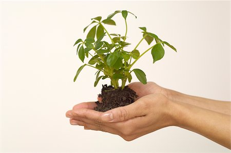 Person holding seedling Stock Photo - Premium Royalty-Free, Code: 628-02953556