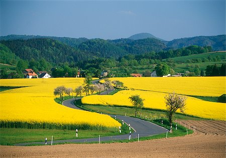 Blooming rape fields and country road, Saxon Switzerland, Germany Stock Photo - Premium Royalty-Free, Code: 628-02953915